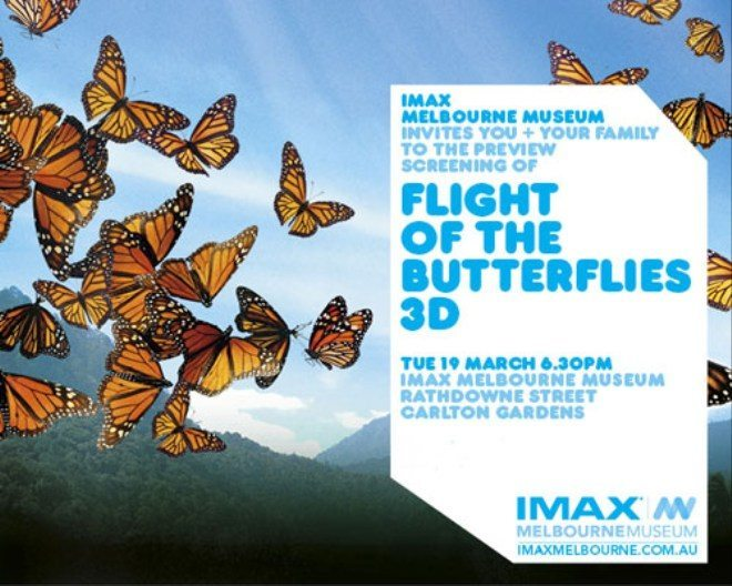 260213032930_butterflies