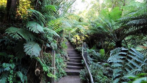 1000_steps_kokoda_walk_yvdr_r_503x283
