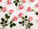 2-1_History-Pink-Roses_MainHero